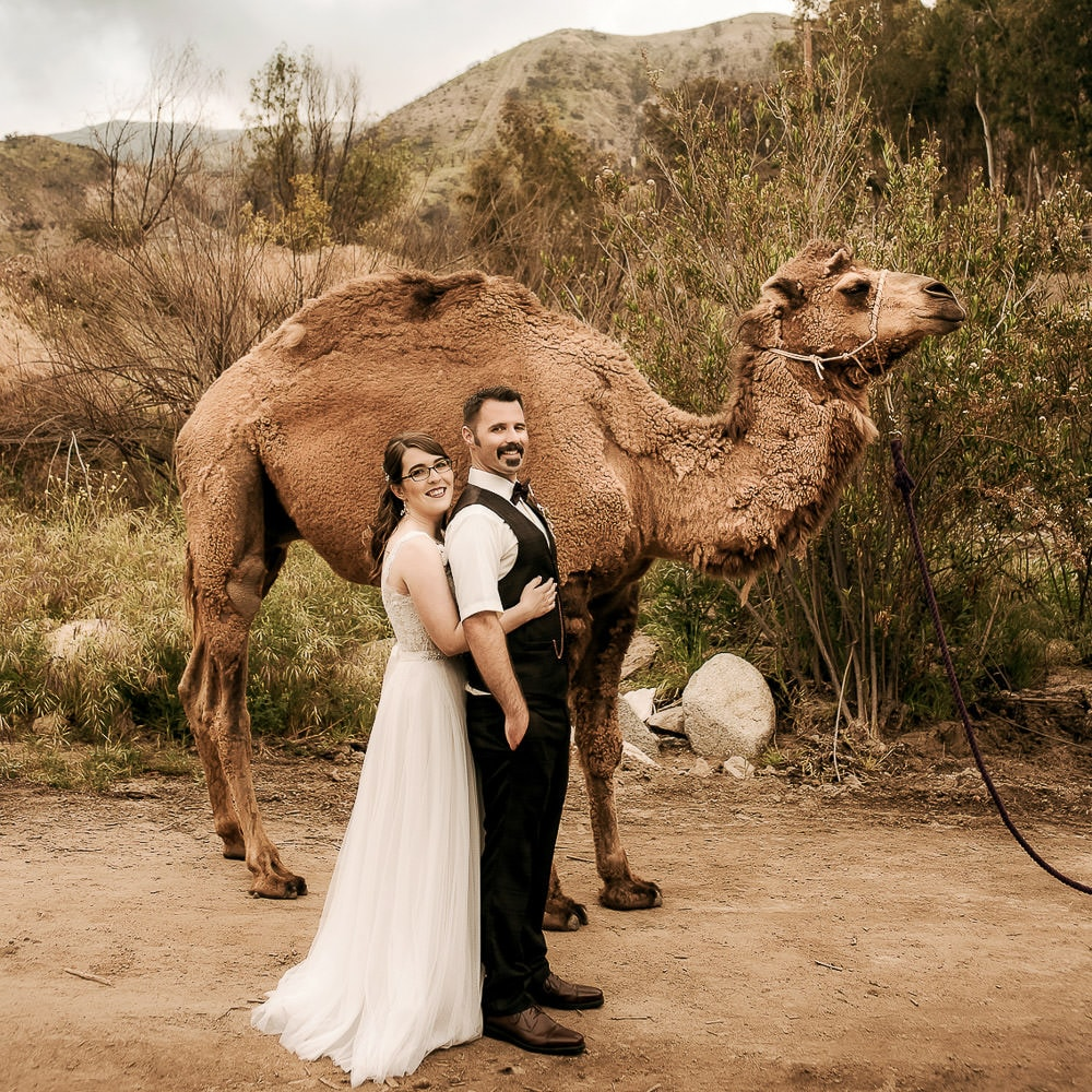 a fun photo of a cute couple posing in front of a camel during their rustic outdoor wedding at Reptacular Ranch in Sylmar, Los Angeles
